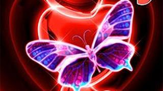 272708 butterfly love