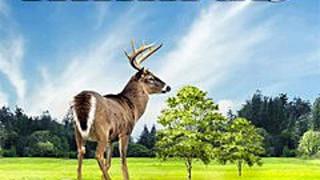 275182 amazing nature