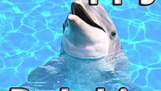 276134 a happy dolphin