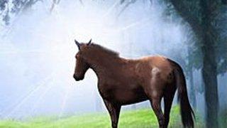 276266 a summer horse