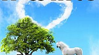 276292 a white horse