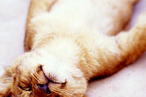 175903 cute felines