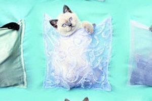 175907 cute kittens