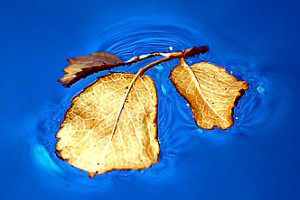 176800 ios 4 wallpaper leaf christian lambert photography