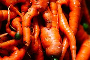 176844 warped knobby strange organic carrots d sharon pruitt