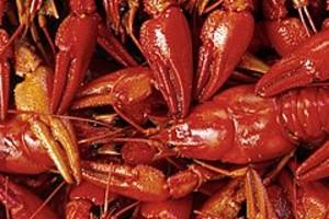 252772 crayfish
