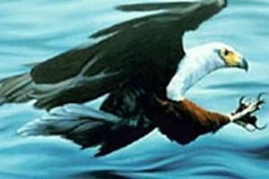 252823 eagle attack