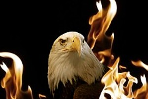 252826 eagle in the flames