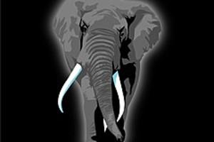 252832 elephant walking