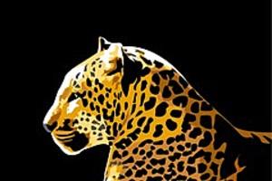 252892 leopard lying down