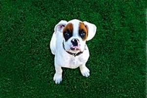 252948 puppy