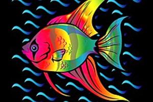 252958 rainbow fish