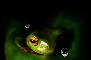252968 secret frog