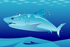 252970 shark