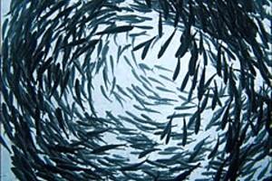 252972 shoal of fish