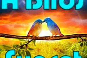 276128 a birds sunset