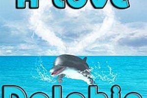 276172 a love dolphin