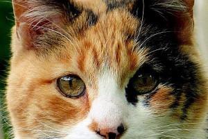 298957 cat wallpaper installer