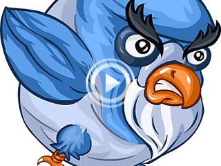 402378 pigeon bomber