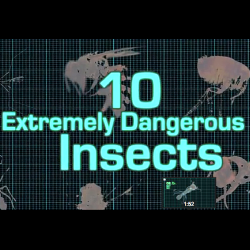 257121 dangerous insects