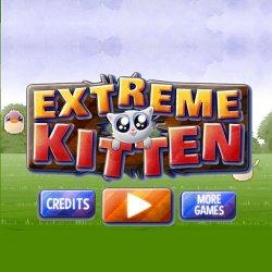 279511 extreme kitten